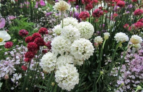 I fiori quando piantarli il calendario stagionale bricoliamo - Bulbi estivi quando piantarli ...