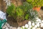 consociazione-erbe---a