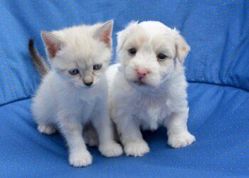cuccioli cane e gatto