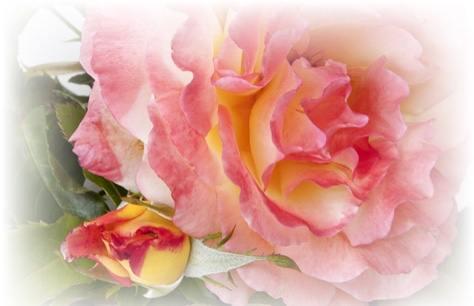 rosa Repubblica San Marino