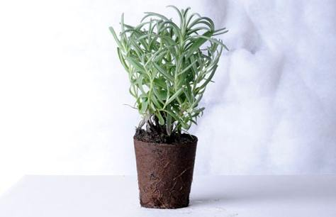 vaso biodegradabile