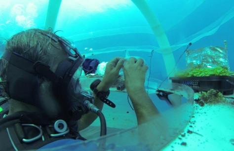 floratrade subacquea