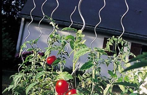 pomodori nortene