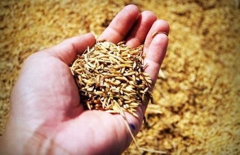 Scegliere la giusta tecnica di semina bricoliamo for Semina a spaglio