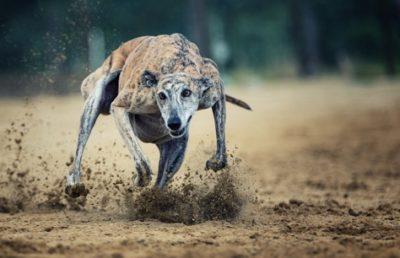 cane in corsa