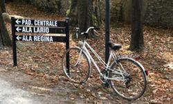 bicicletta nel bosco