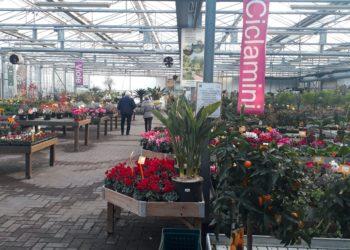 Toppi garden center