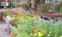 fiori nel garden