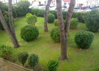 giardino con piante e aiuole