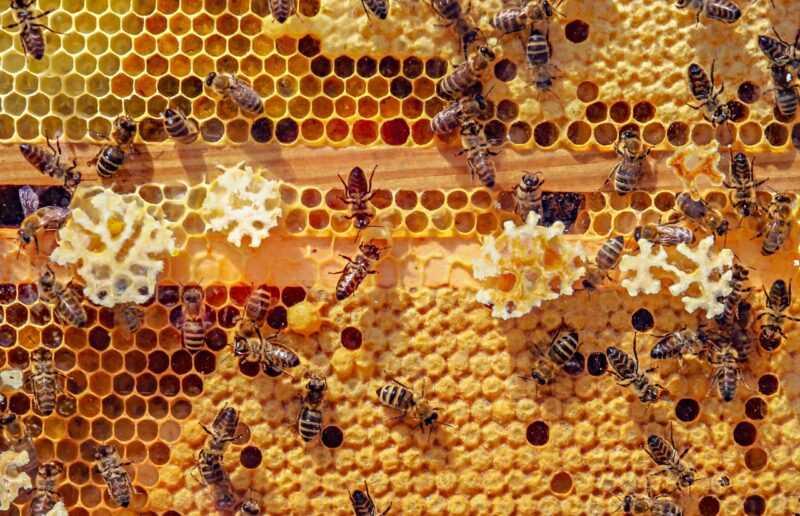 alveare con api operaie