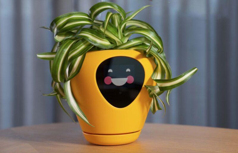 il vaso che sorride