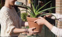 Botamici, i plant sitter per le vacanze