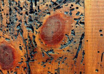 legno tarlato