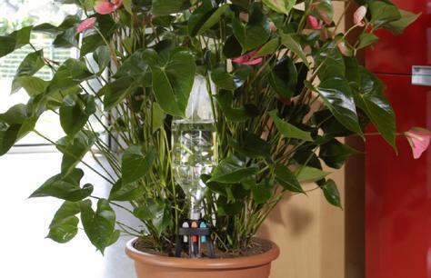 Irrigare le piante con idris soluzione economica bricoliamo for Annaffiare le piante