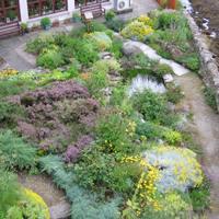 Come eliminare le formiche dall 39 orto e dal giardino bricoliamo - Eliminare topi dal giardino ...