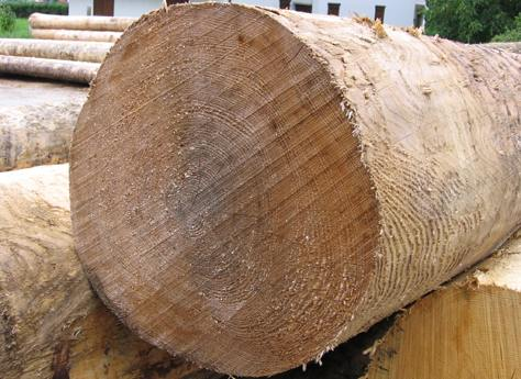 Come tagliare il legno venature versi tipi di lama for Taglio legno bricoman