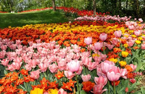 gardena ospite di messer tulipano bricoliamo. Black Bedroom Furniture Sets. Home Design Ideas