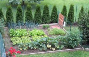 Guida alla coltivazione dell 39 orto semina cura e raccolto for Cosa piantare nell orto adesso