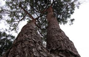 Come piantare un albero periodi interramento for Piantare un giardino